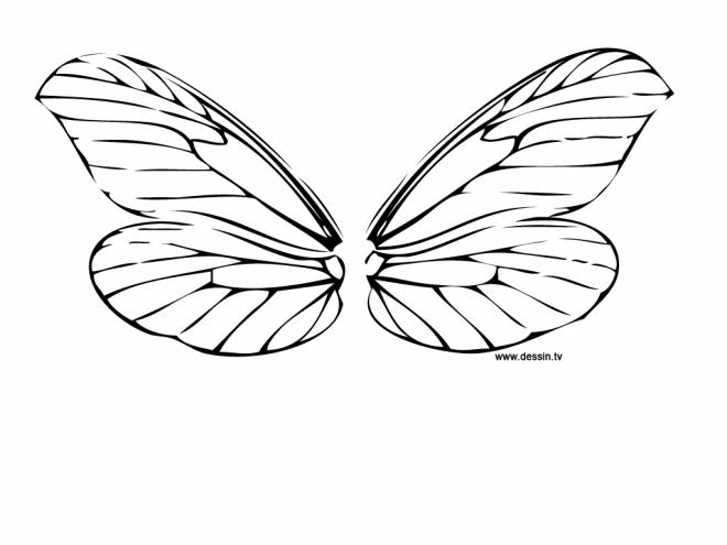 Free coloring and drawings Dragonfly color Coloring page