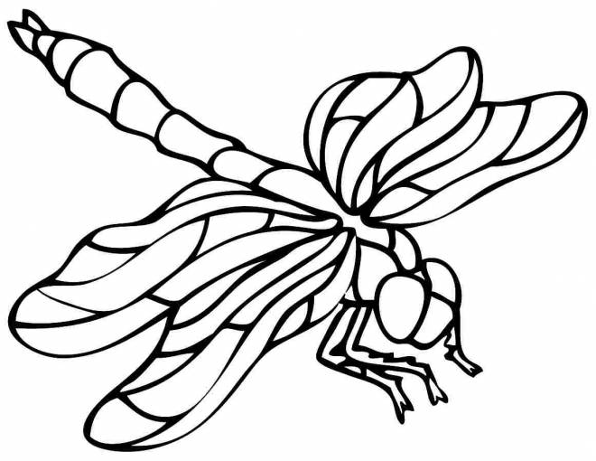 Free coloring and drawings Dragonfly coloring wallpapers Coloring page