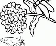 Coloring pages Dragonfly image page