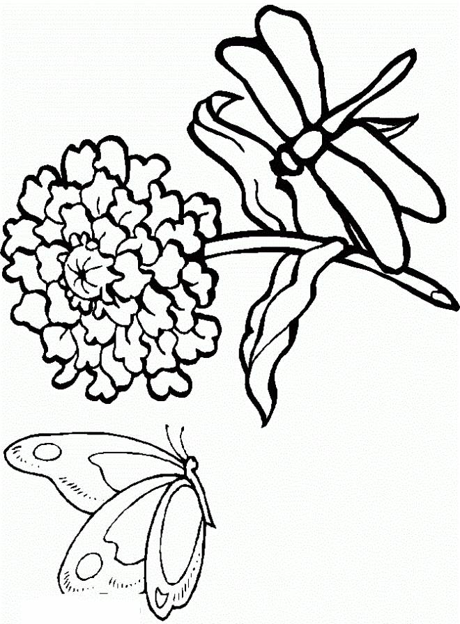 Free coloring and drawings Dragonfly image page Coloring page
