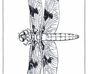 Coloring pages Dragonfly smiling