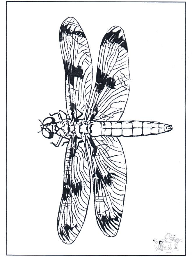 Free coloring and drawings Dragonfly smiling Coloring page