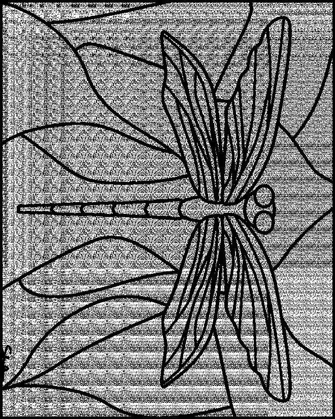 Free coloring and drawings Dragonfly walking Coloring page