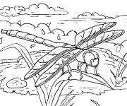 Coloring pages Dragonfly wonderful world