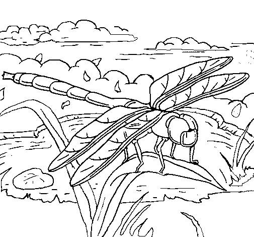 Free coloring and drawings Dragonfly wonderful world Coloring page
