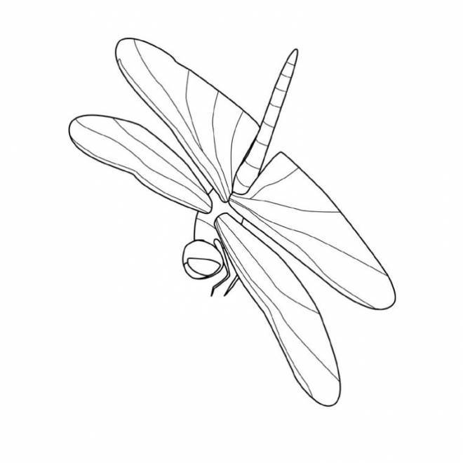 Free coloring and drawings Simple Dragonfly  Coloring page