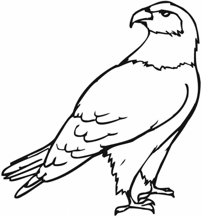 Free coloring and drawings A beautiful eagle Coloring page