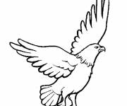 Free coloring and drawings Eagle color Coloring page