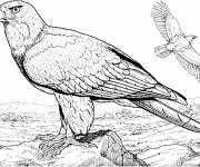 Free coloring and drawings Eagle in the wild Coloring page