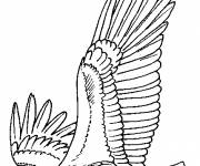 Free coloring and drawings Eagle wings Coloring page