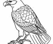 Free coloring and drawings Easy eagle Coloring page