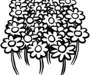 Coloring pages Field flowers