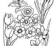 Coloring pages Flowered fields