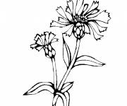 Coloring pages Plant fields