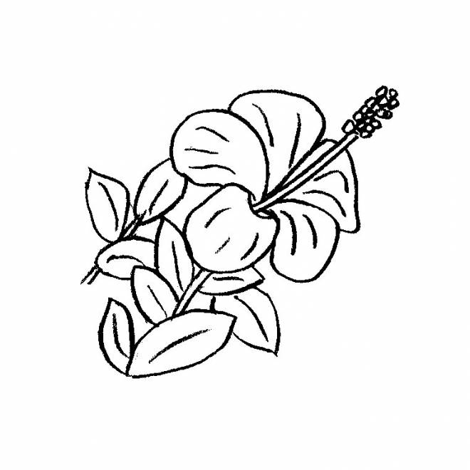 Free coloring and drawings A beautiful flower Coloring page