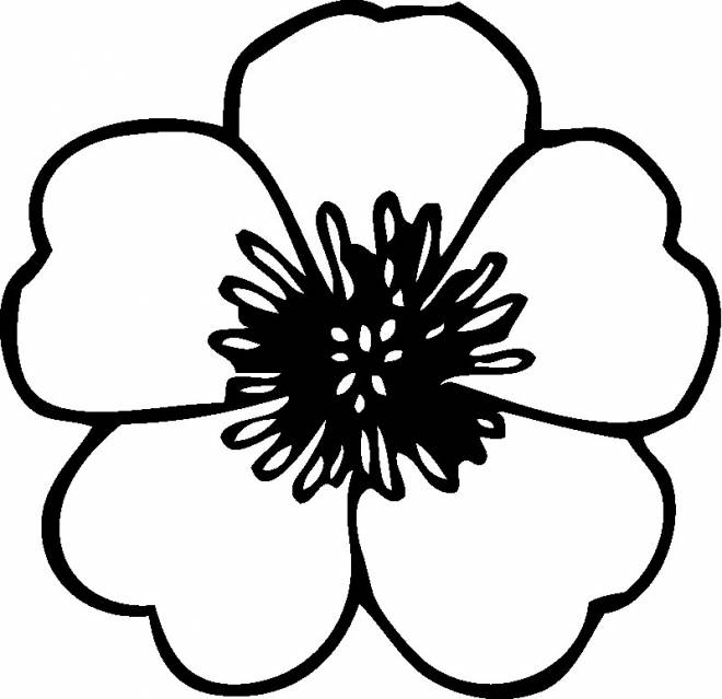 Free coloring and drawings An ordinary flower Coloring page