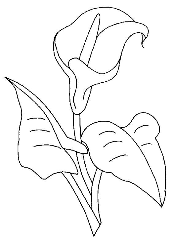 Free coloring and drawings Beautiful flower Coloring page