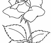 Free coloring and drawings Camellia flower Coloring page