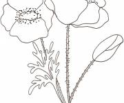 Coloring pages Colored poppy