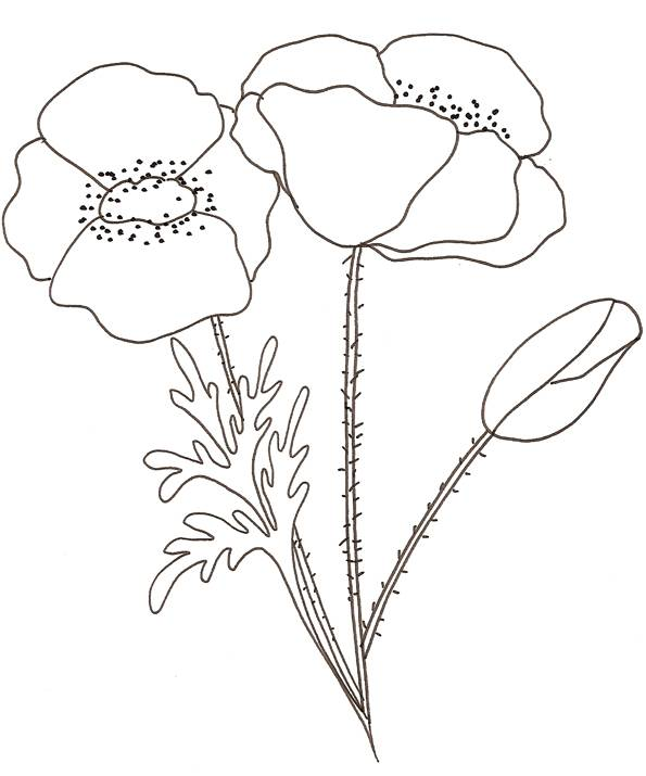Free coloring and drawings Colored poppy Coloring page
