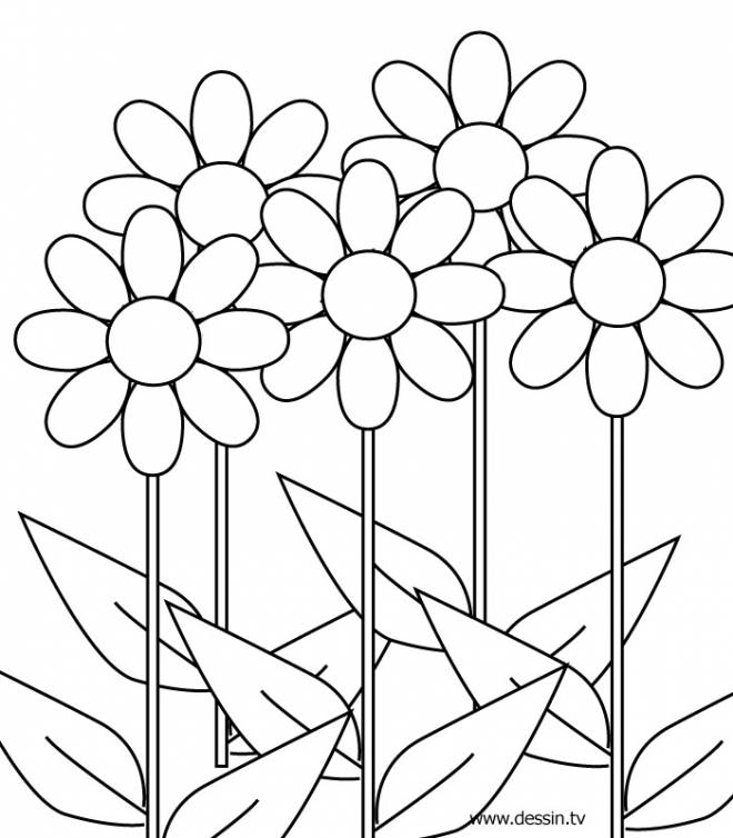 Free coloring and drawings Flower coloring Coloring page