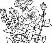 Coloring pages Flower garden to print