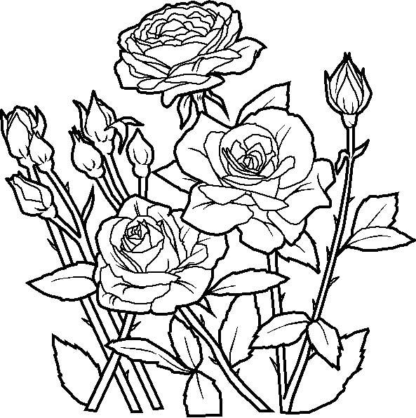 Free coloring and drawings Flower garden to print Coloring page