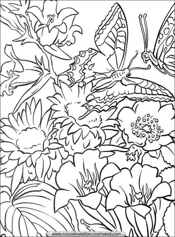Free coloring and drawings Flowers and butterflies Coloring page