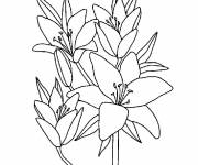 Coloring pages Flowers to download