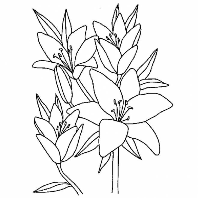 Free coloring and drawings Flowers to download Coloring page