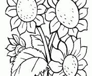 Coloring pages Sunflower flower