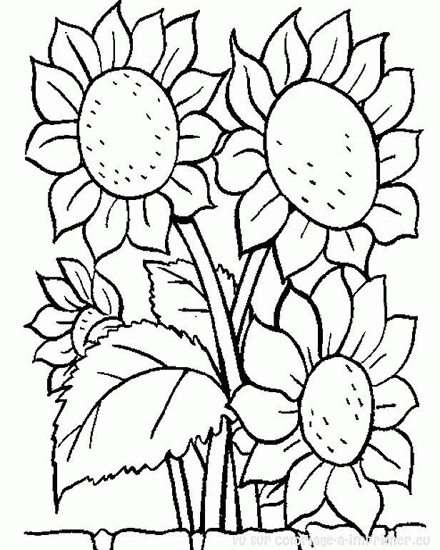 Free coloring and drawings Sunflower flower Coloring page