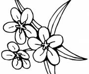 Coloring pages Tiare flower Tahiti