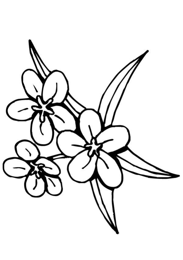 Free coloring and drawings Tiare flower Tahiti Coloring page