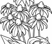 Coloring pages Violet Flowers