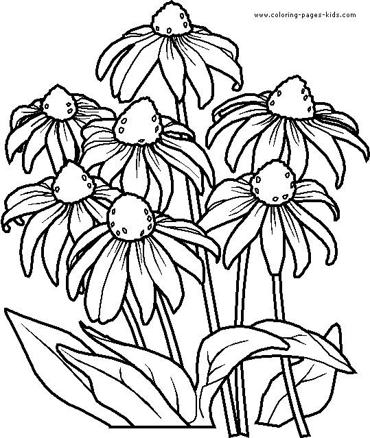 Free coloring and drawings Violet Flowers Coloring page