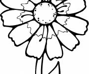 Coloring pages White flower