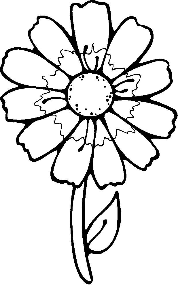 Free coloring and drawings White flower Coloring page
