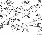 Coloring pages Adult Frogs