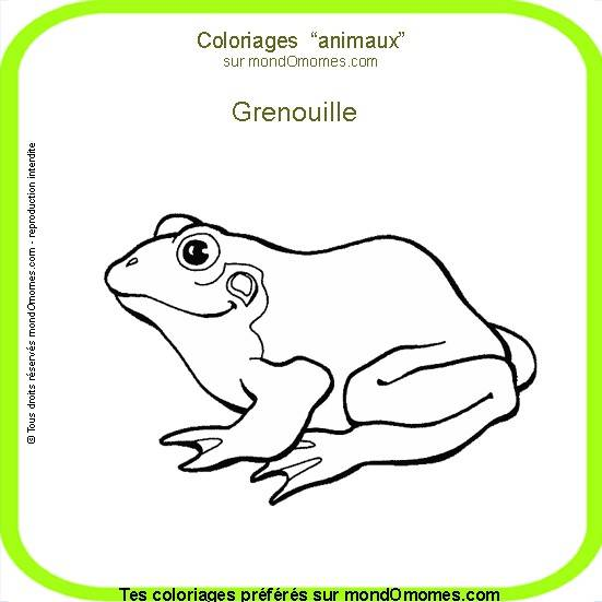Free coloring and drawings Frog animal Coloring page