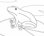 Coloring pages Frog in water