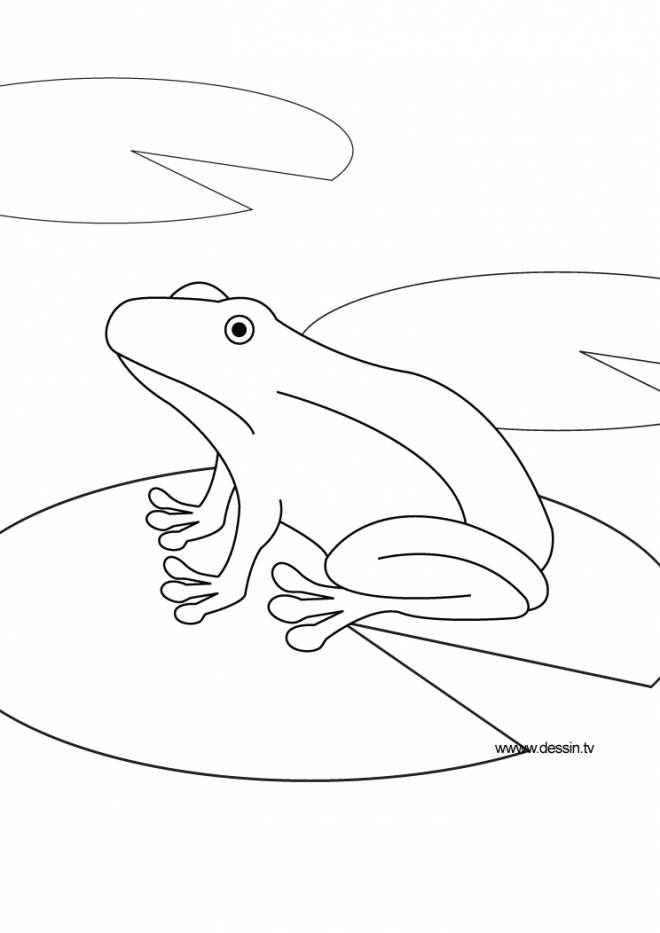 Free coloring and drawings Frog in water Coloring page