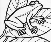 Coloring pages Frog on the Leaves