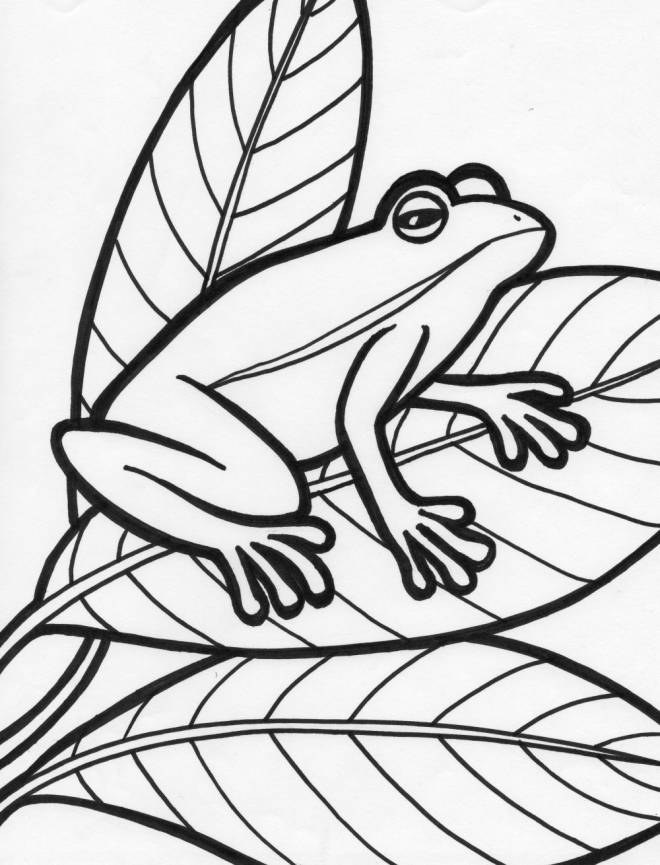 Free coloring and drawings Frog on the Leaves Coloring page