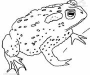 Coloring pages Green Frog Adult
