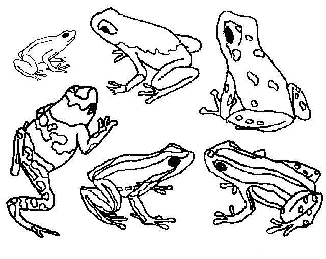 Free coloring and drawings Life cycle frog Coloring page