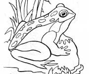 Coloring pages Outdoor frog
