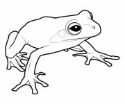 Coloring pages Spotless frog