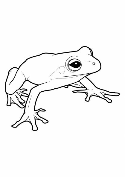 Free coloring and drawings Spotless frog Coloring page
