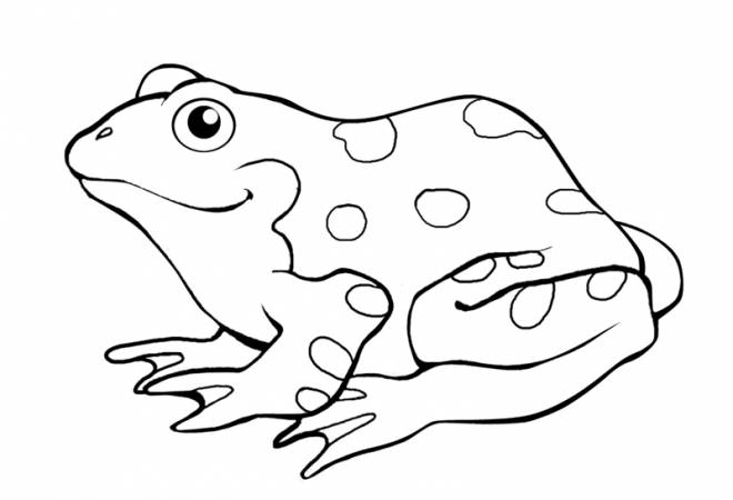 Free coloring and drawings Spotted green frog Coloring page